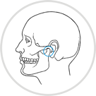 icon representing Temporomandibular joint