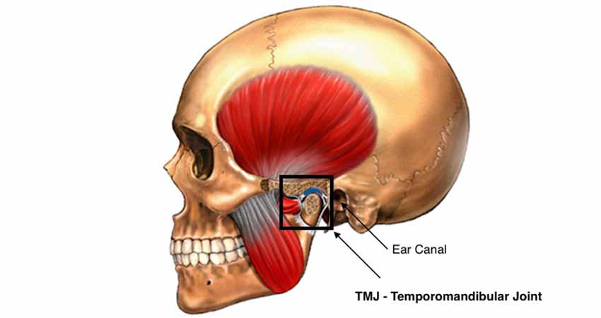 Image showing TMJ and ear canal